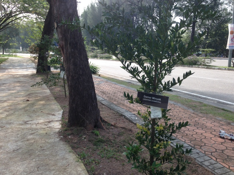 New plantings of forest species as part of the green the earth project with participating schools