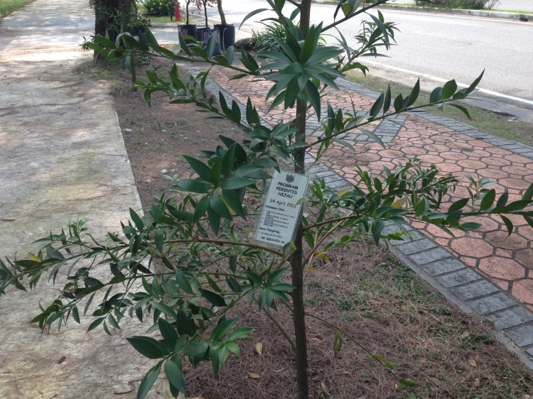 Info on who planted the tree