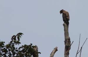 cs eagle 4