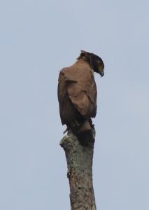 cs eagle